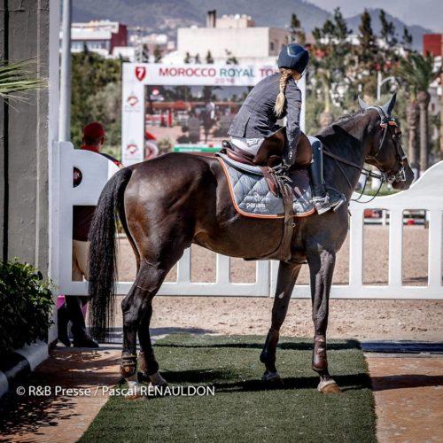Sillas montar todas las sillas de montar a caballo y sus accesorios - Silla montar caballo ...