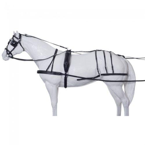 Carruajes caballos