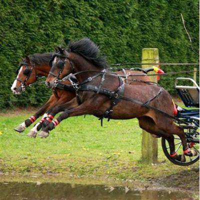 Enganches caballos